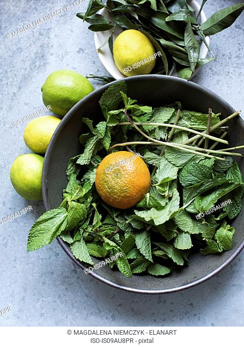 Overhead view of mint leaves and citrus fruits in bowl