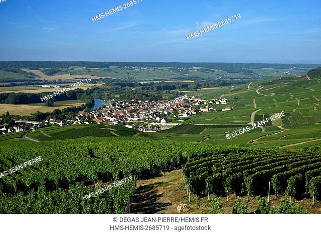 France, Marne, Cumieres, Marne Valley, Champagne vineyard ranked Premler Cru with a village in edge of the Marne below