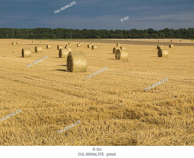 Harvested wheat field with haystacks