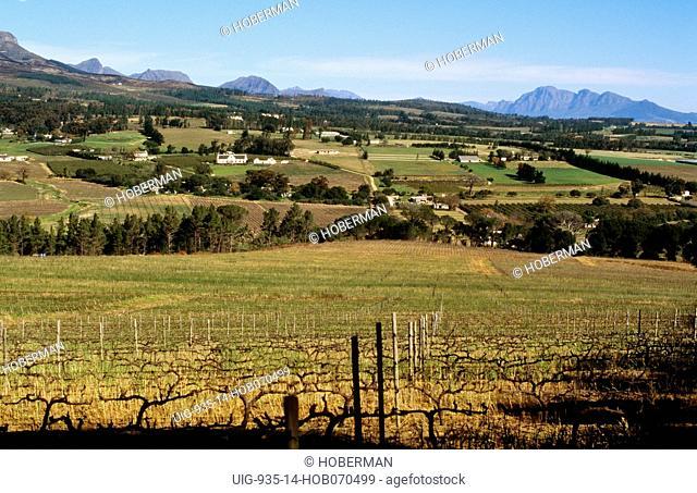 Cape Wine Route, Stellenbosch, Western Cape