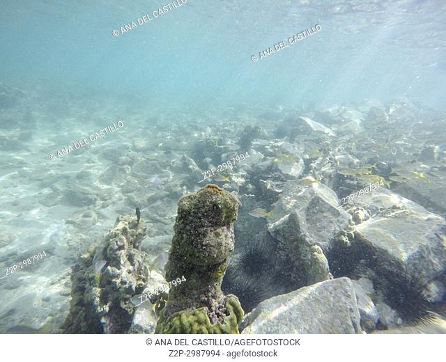 Underwater image in Young Island, Saint Vincent And The Grenadines Caribbean sea