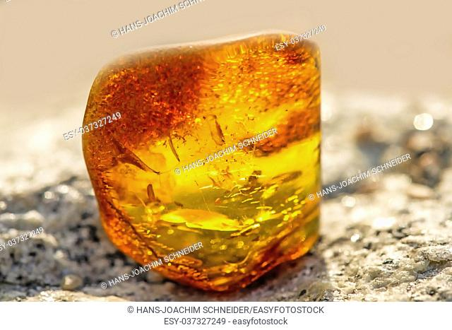 Amber on a beach of the Baltic Sea