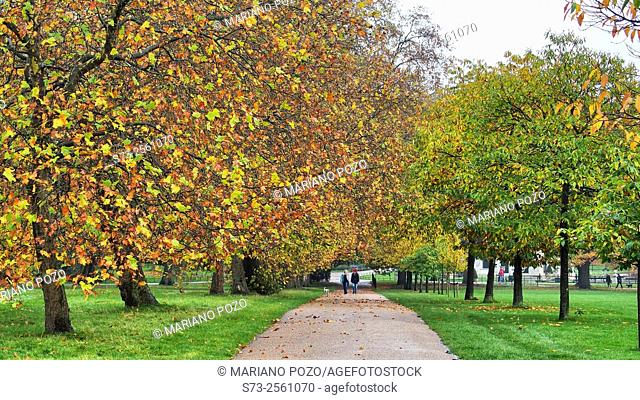 Autumnal trees, Hyde Park, London, England, United Kingdom, Europe
