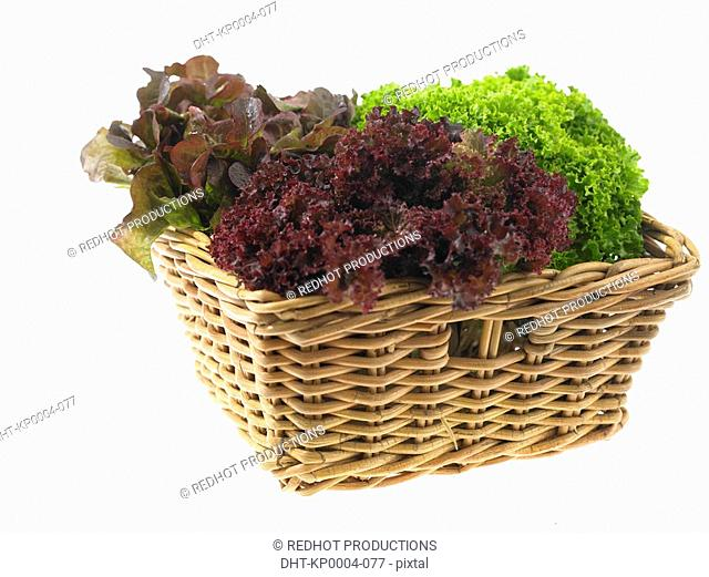 Various kinds of Lettuce in a basket