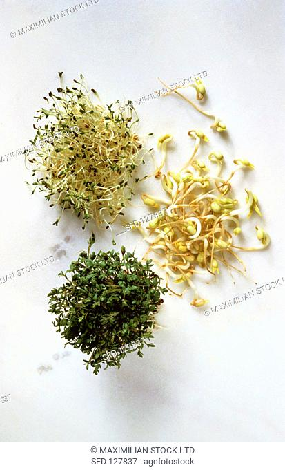Three Assorted Sprouts, Cress Alfalfa and Mung Bean