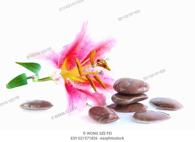 Pink lily and stones
