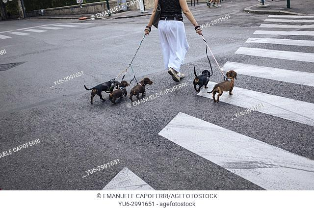 Woman takes five dogs on a leash to walk, rome, Italy