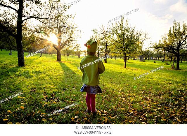 Germany, Baden-Wuerttemberg, back view of little girl standing on a meadow at evening twilight