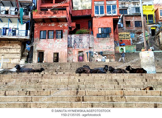 Narad Ghat, Varanasi also known as Benares, Banaras or Kashi, city on the banks of the Ganges in Uttar Pradesh, the holiest of the seven sacred cities (Sapta...