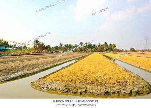 Soil preparation land for vegetable cultivation