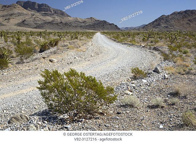 Mormon Well Road, Desert National Wildlife Refuge, Nevada
