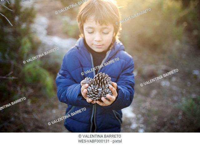Little boy with handful of fir cones