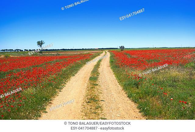 Castile La Mancha poppies at Camino de Santiago saint James Way of Levante
