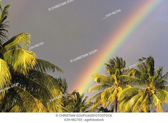 rainbow over palm tree,Lesser Antilles,Caribbean Sea