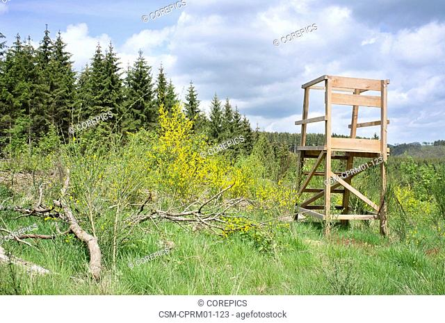 Countryside landscape with a wooden high chair, used for hunting