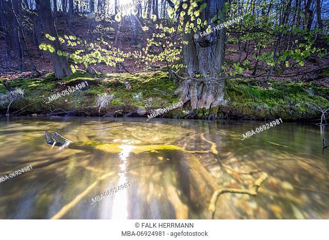 Lakeside, forest, sunshine, backlight