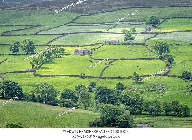 Miles of dry stone walls form a patchwork of pastures across the hilly countryside of Swaledale, Yorkshire Dales National Park, UK
