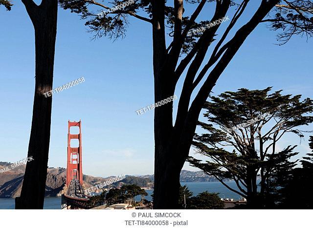 USA, California, San Francisco, Golden Gate Bridge seen among trees