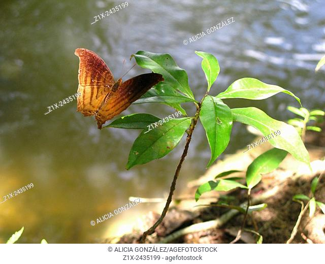 Butterfly in Cataniapo River in Amazonas state, Venezuela