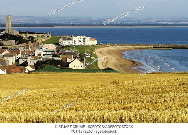 Wheat field and view of St Andrews Town on the coast, St Andrews Fife, Scotland, United Kingdom