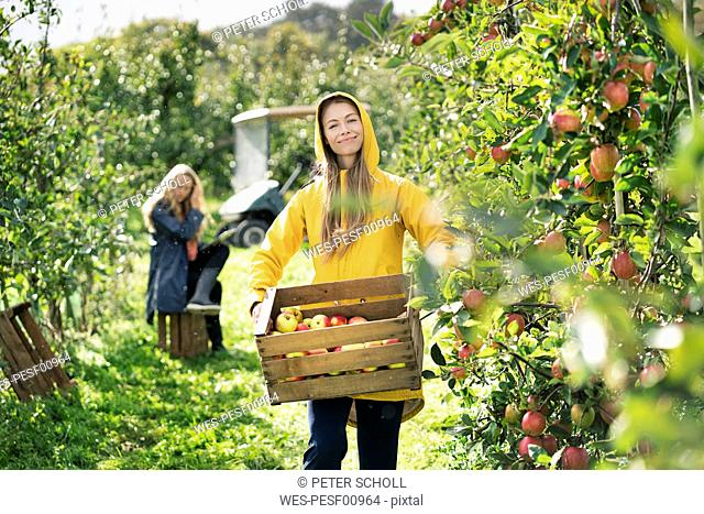 Two women harvesting apples in orchard
