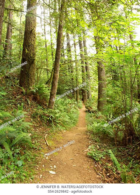 A hiking trail in Del Norte State Park, Redwoods, California, USA