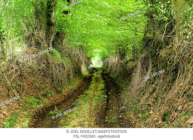 Sunken lane, hedged farmland of Basse-Normandy (Orne, Lower-Normandy, France)