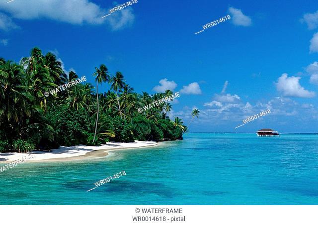 Beach at Maledives Island, Indian Ocean, Maldives