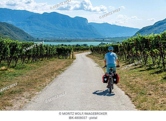 Cyclist with mountain bike, on the cycle path Via Claudia Augusta, crossing the Alps, between vineyards, vineyards, Lake Caldaro, Caldaro, Trentino, South Tyrol