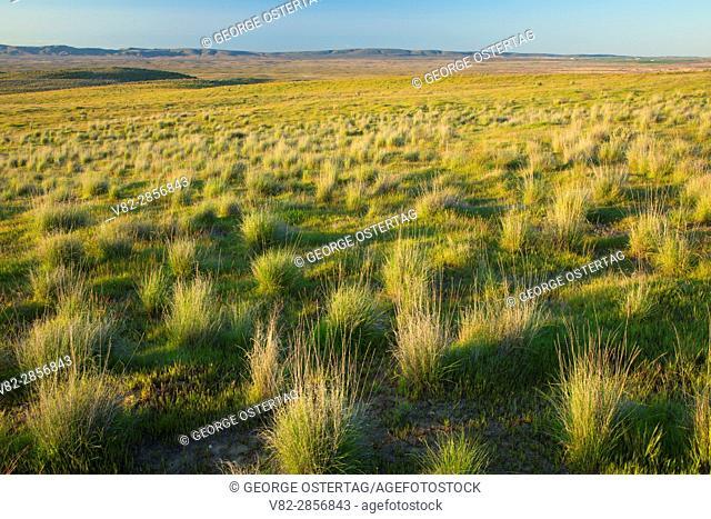 Grassland, Hanford Reach National Monument, Washington
