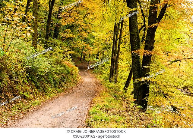 Track though an autumn woodland near Dulverton in the Exmoor National Park. Somerset