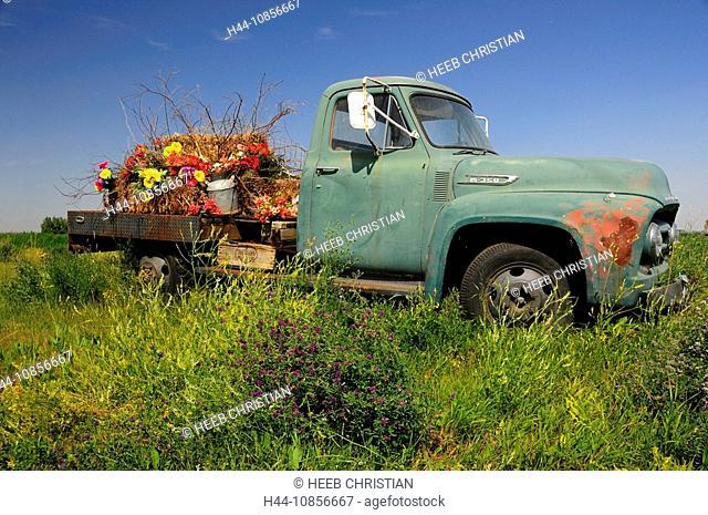 10856667, Canada, Flowers, Old Pickup Truck, near