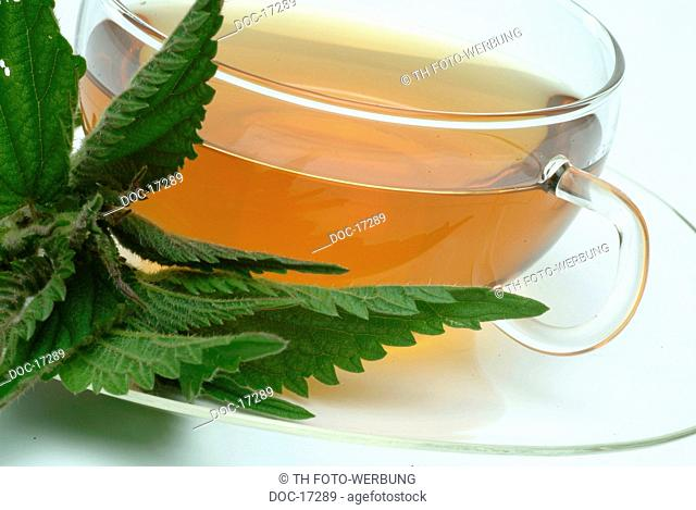 medicinal tea made of Common nettle - stinging nettle - fresh parts and cup of tea - herb - medicinal plant - Ortica comune - te