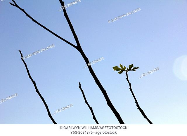 leaves on top of tree branch with other bare branches