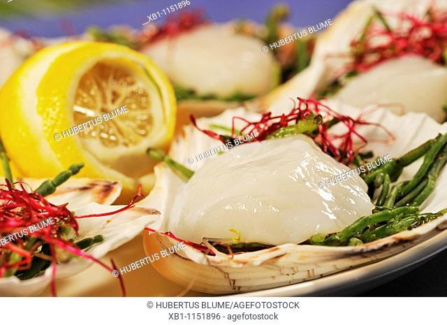 Fresh scallops served