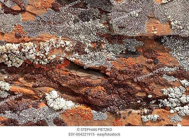 Rock Lichens Background Pattern