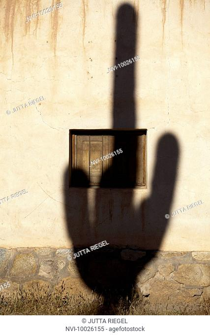Shadow of a cactus