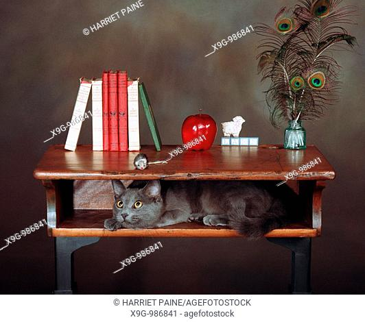 Cat and mouse in old desk