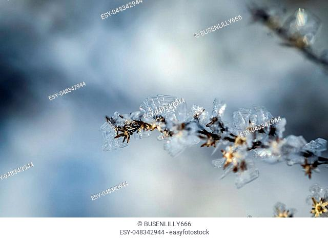 frozen plants grown with ice crystals in winter sunlight