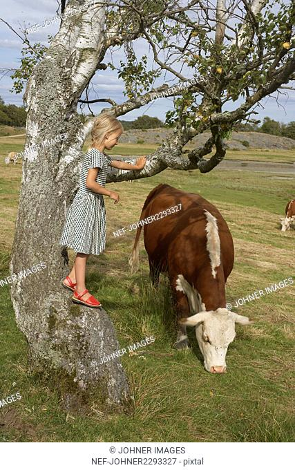 Girl looking at cow grazing in meadow