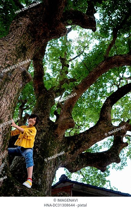 Big tree and Kids