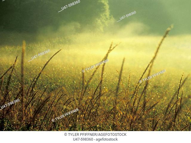Early morning mist. Northwestern  Wisconsin. USA