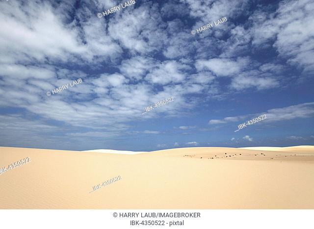Sand dunes under blue sky with clouds, wandering dunes of El Jable, Las Dunas de Corralejo, Corralejo Natural Park, Fuerteventura, Canary Islands, Spain