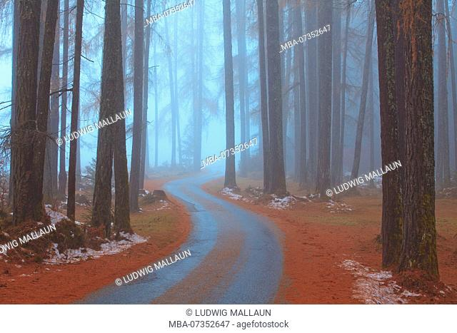 Austria, Tyrol, road in the larch forest, November fog