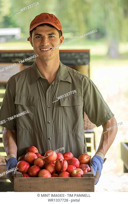 Organic farmer, young man holding baskets of fresh fruit at a market farm stand