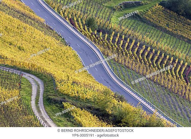 vineyards and road, near Leiwen, Rhineland-Palatinate, Germany