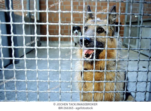 DEU, Germany Essen : Dogs in an animal shelter, in a kennel