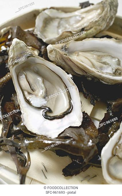 Fresh oysters, opened, on seaweed