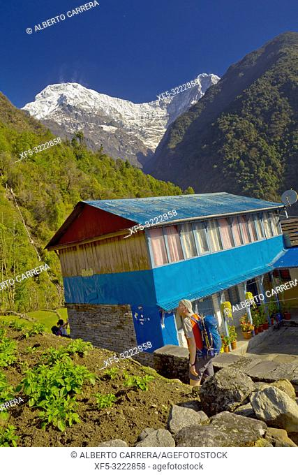 Hikkers on Route, Mountain Footpath, Annapurna South and Hiuchuli, Annapurna Range, Trek to Annapurna Base Camp, Annapurna Conservation Area, Himalaya, Nepal