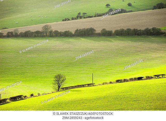 Early spring in South Downs National Park near Brighton, East Sussex, England